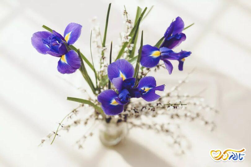 مفهوم گل زنبق در عروسی